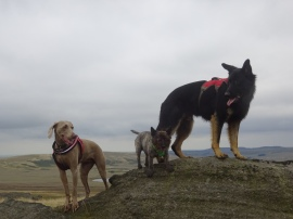 Moorland dog walking