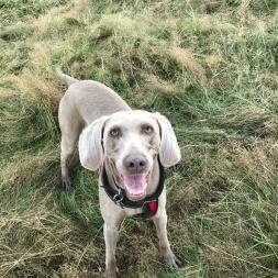 Dog walking in Yorkshire