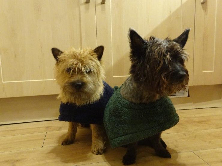 dog towel coats