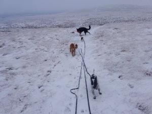 dog walks on moorland